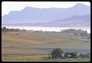 SOUTH AFRICA 40106: WINE ROUTE