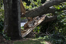 Auckland-Wind gusts bring down trees and power lines