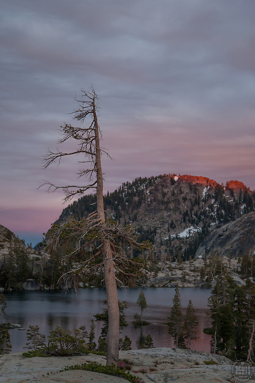 """Paradise Lake Sunset 5"" - Photograph of a dead pine tree at Paradise Lake in the Tahoe National Forest taken at sunset."