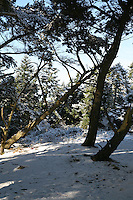 Snow covered trees on Dalkey Hill Dublin Ireland November 2010
