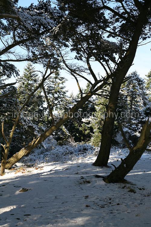 Snow covered trees on Dalkey Hill Dublin Ireland November 2010