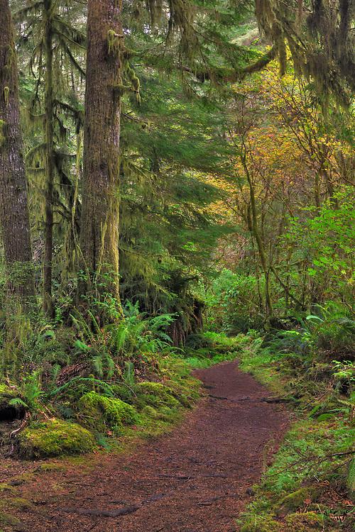 Sweet Creek Falls Canopy Trail - Mapleton, Oregon - HDR