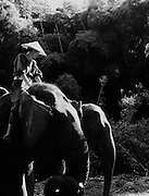 Guest riding an elephant at the Four Seasons Golden Triangle resort