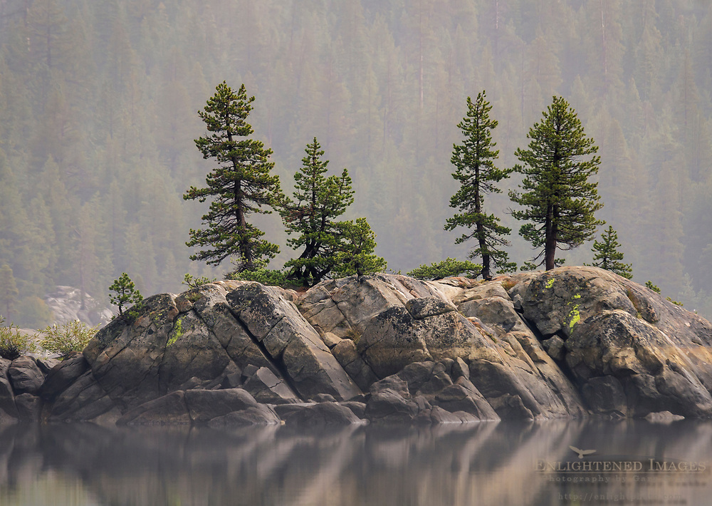 Trees on rock island in Lake Alpine, Stanislaus National Forest, Alpine County, California