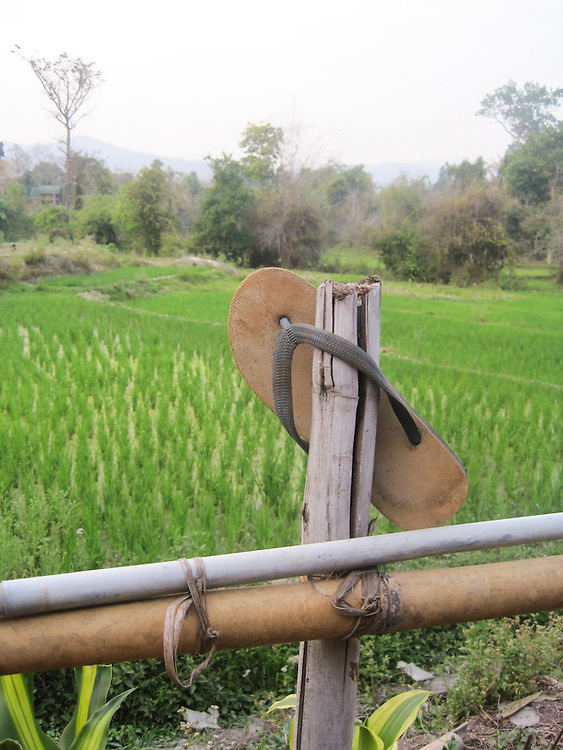 Mira took this photo when she passed by the rice field. There are still 3-4 months to go before she can get the crops
