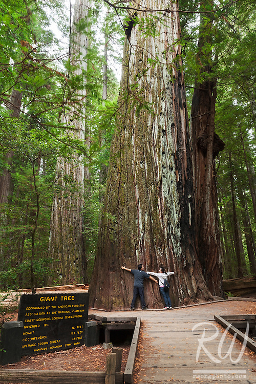 Tree Huggers at Giant Tree in Rockefeller Forest, Humboldt Redwoods State Park, California