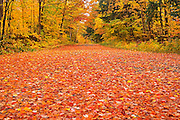 Country road covered in fallen maples leaves in autumn<br /> Goulais River<br /> Ontario<br /> Canada