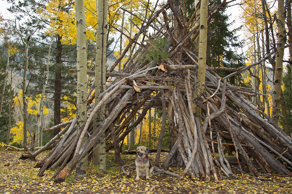 Dog sitting in a handmade Teepee in New Mexico
