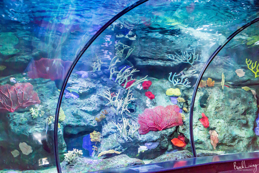 Felicia and Calvin Jowhill wedding at Ripley's Aquarium, Myrtle Beach, SC