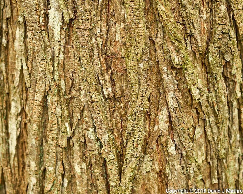Tree Bark (Oak?). Image taken with a Fuji X-H1 camera and 60 mm f/2.4 macro lens.