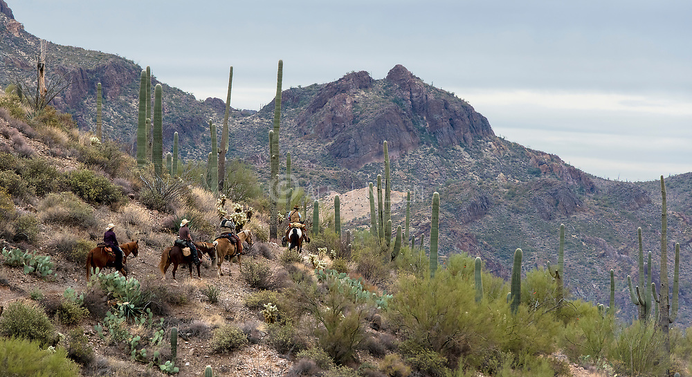 Tracking on horseback through the desert of The Superstitions, southern Arizona, USA