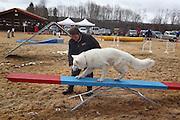 Aipo av rasen hvit gjeterhund er champion på utstilling, men eier Kari krogstad fra Selbu har også lært ham endel triks. Her lærer han å gå planken på agilitybanen. Hoinndagan i Selbu. Foto: Bente Haarstad