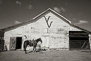 Horse Tied at Barn Twin V Ranch, Texas