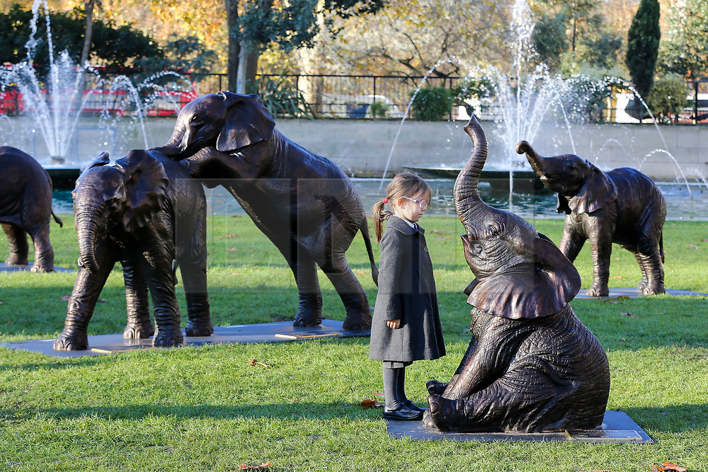 © Licensed to London News Pictures. 04/12/2019. London, UK. 4 years old Georgiana Chubb from Hampden Gurney Primary School looks at a sculpture of an elephant in at Marble Arch during an unveiling of life-sized herd of 21 bronze elephants.<br /> The sculpture is the largest such depiction of an elephant herd in the world and is intended to draw attention to the plight of this species that could be extinct on current trends, by 2040. Each elephant in the sculpture is modelled after a real orphaned animal currently in the care of the Sheldrick Wildlife Trust. Left behind by poachers and other sources of human-wildlife conflict these animals have been raised by the trust in an effort to secure the future of the species. The herd will be displayed until 4 December 2020. Photo credit: Dinendra Haria/LNP
