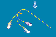 A vector illustration of yacht racing techniques and maneuvers.