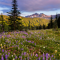 I want to go back. I've never seen such prolific displays of wildflowers before. I was fortunate to join some Seattle photographer peeps to capture some shots out in the Paradise Meadows.