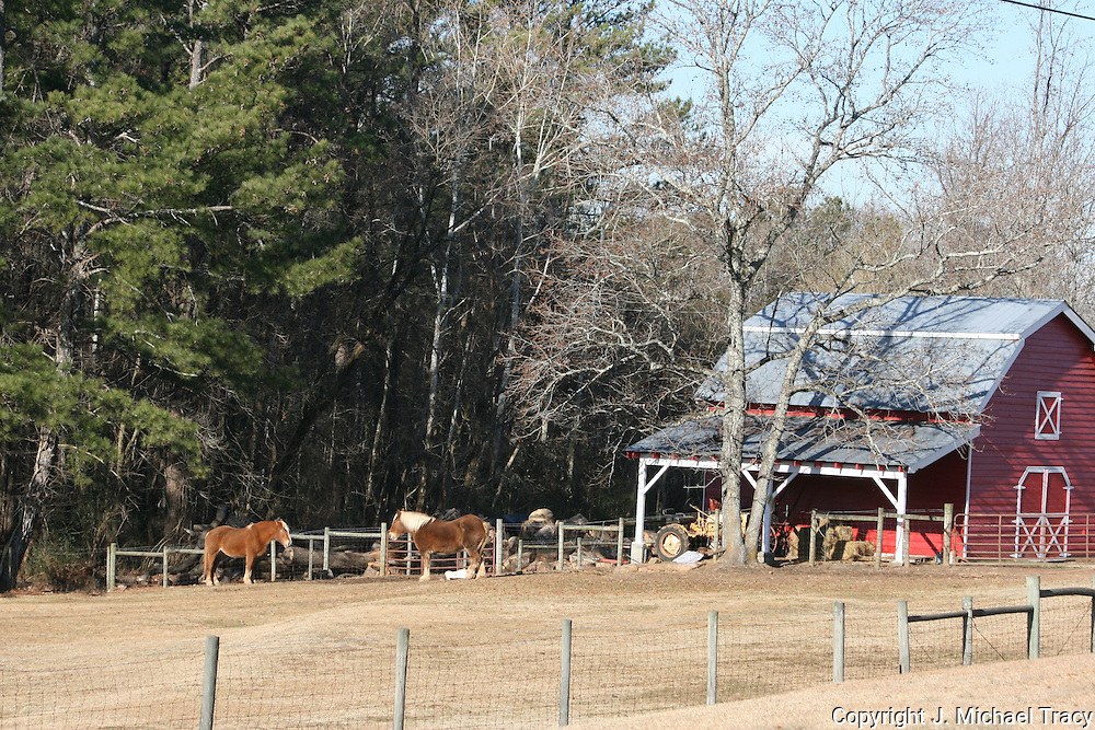 Two draft horses laze in the pasture outside a little red, tin roofed, country Horse shed.