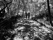 A walk into dappled light in Central Park, New York City