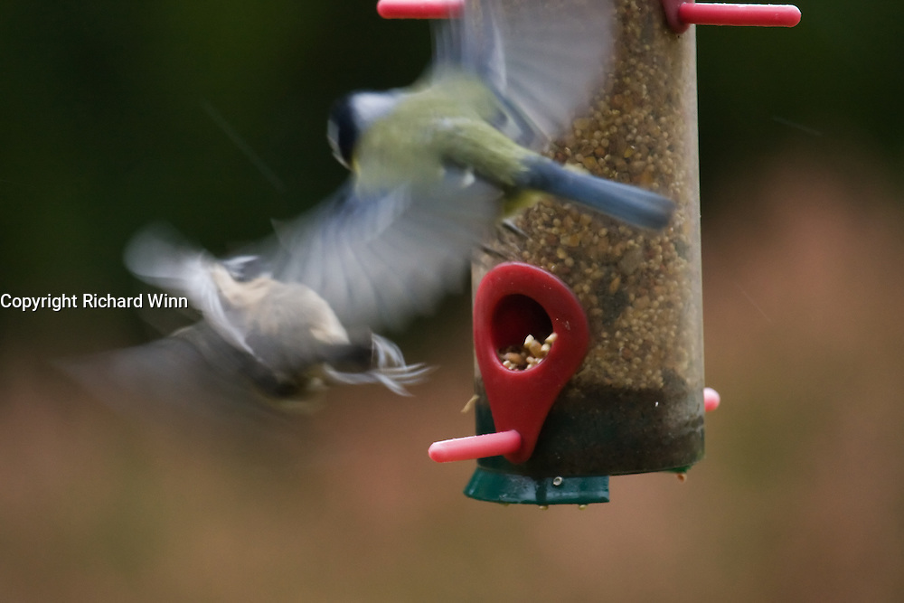 Normally we strive for sharp images, but use of slow exposures to show up motion blur can reveal otherwise unseen behaviour, This photograph clearly shows the coal tit flying backwards to avoid the attentions of the larger blue tit.