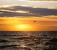 Lake Michigan And A Solitary Seagull Against A Golden Sunset Sky At Grand Haven Michigan, USA