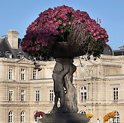 Basin filled with Surfinia Petunias, carried by cherubs, outside the Luxembourg Palace, 17th-19th century, Paris, France. Marie de Medici (1573-1642) commissioned the gardens and palace in 1611, in Florentine style. They were extended and altered until the 19th century. The Palace now houses the French Senate, the public gardens contain many statues and are a peaceful haven in the busy city. Photograph by Manuel Cohen.