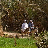 oasis, the nile river near edfou,   Egypt    /  oasis sur une ile du  Nil pres d  Edfou  Egypte