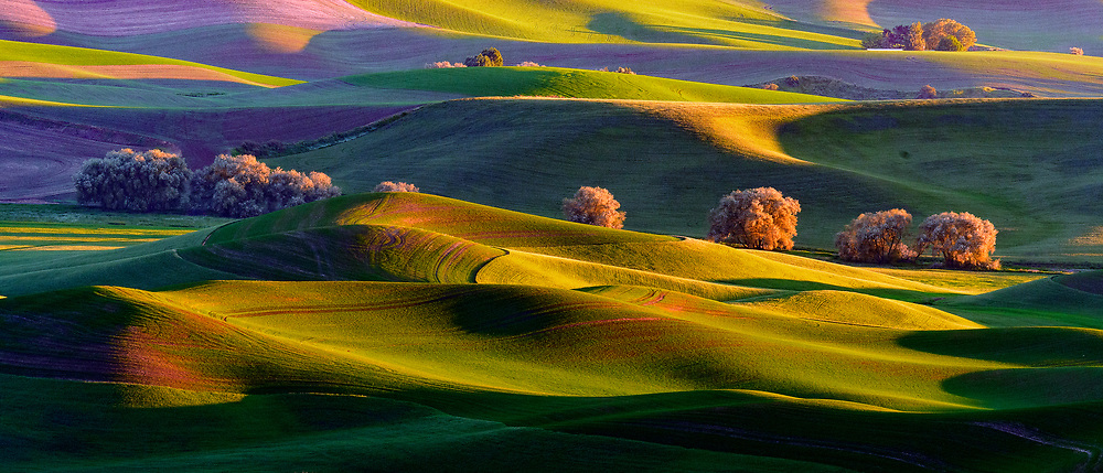 Hills of Palouse at sunset