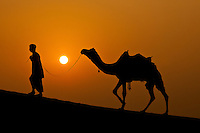Man leading a camel through the desert beautiful orange sunset, India. Exotic destinations fine art photography prints. Wall art and stock images