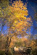 Harrisburg, PA, Wildwood Park, Fall Foliage, Walking Path