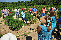 Extension specialist Dr. Angela Post speaks to agents and directors during a tour of Broadway Hemp's farm in Harnett County.