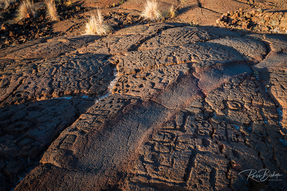 Hawaiian petroglyphs on the Mamalahoa Trail (Kings Trail), Waikoloa, Kohala Coast, The Big Island, Hawaii USA