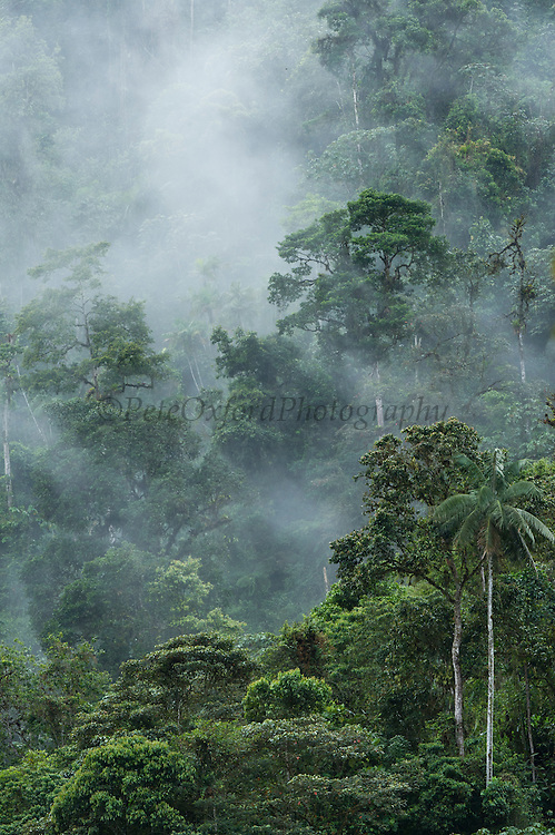 Cloud Forest Canopy<br /> Mindo<br /> Cloud Forest<br /> West slope of Andes<br /> ECUADOR.  South America