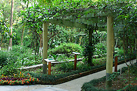 The Sickness Treatment Gallery in the Guangxi Medicinal Herb Botanical Garden in Nanning contains all the plants noted in the ancient text, Ben Cao Gang Mu.   The plants are arranged in area of illness eg. respiratory system, digestive system