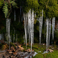 https://Duncan.co/icicles-and-moss