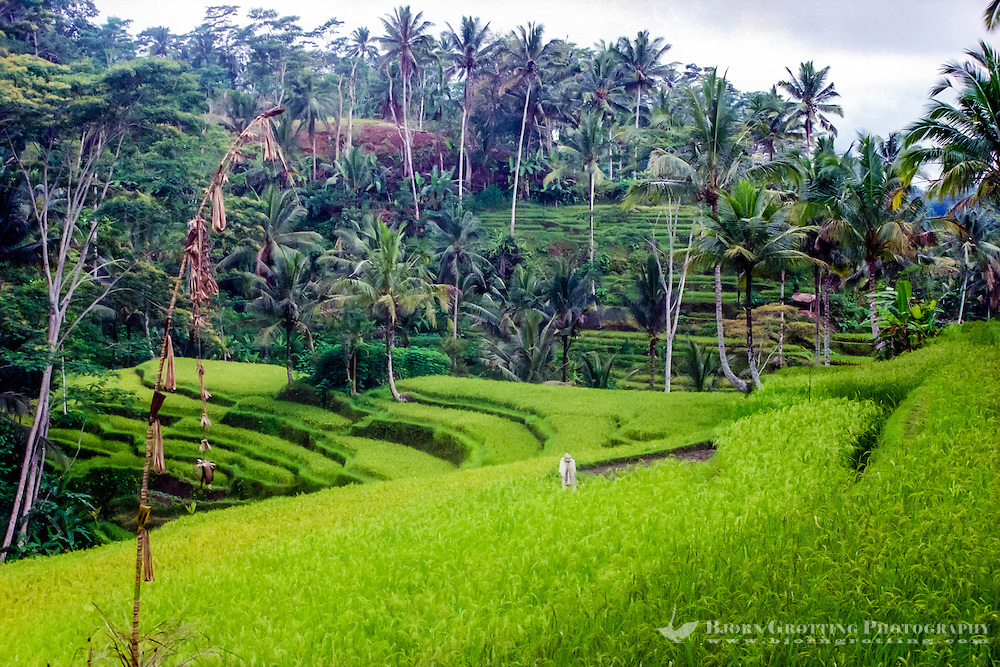 Bali, Gianyar, Gunung Kawi. Gunung Kawi is beautifully located and surrounded by fertile rice fields and forests.
