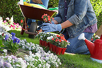 Woman planting flowers in garden, low section