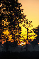Sunrise near Bardia National Park, Nepal