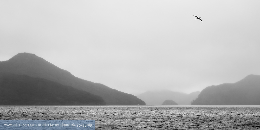 Port Fitzroy, Great Barrier Island.  High winds and rain, Gannet flying overhead and distant hills receeding to white-out.