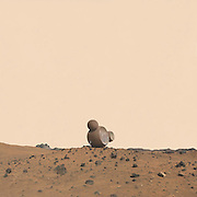 """Life on Mars: Nasa commissions artist to creates mesmerizing photographs of what exploring the red planet will be like<br /> <br /> Artists Nicholas Kahn and Richard Selesnick were asked by NASA to create photographs depicting their fantasies of Mars, the planet they had pretended to explore since they were young.<br /> Only now as grown ups, the usual alien encounters and bursting stars of their childhood days are gone and the two have created extraordinarily thoughtful and complex visions of Mars and humanity's future.<br /> In their collaboration, Mars: Adrift on the Hourglass Sea, two female explorers wander a ruinous, red landscape, surviving together to find and face the unknown.<br /> 'It seemed like all the future was about space travel and then it sort of petered off,' Mr Kahn said to Wired.<br /> 'So we have these kinds of longings of the future … the great age of space travel, so we're kind of keeping these longings out there for other people who it might seem exciting to again.'<br /> NASA approached the pair after they exhibited a series of images based on the moon, called the Apollo Prophecies.<br /> Bert Ulrich, a NASA media relations contact, told them that 'Mars is where we're going to next' and asked that the artists focus on the fourth planet from the sun.<br /> 'We didn't start thinking about Mars until they told us to.'<br /> Mr Ulrich showed them high-resolution photo-mosaic panoramas taken by the Mars rovers Spirit and Opportunity and they were instantly inspired.<br /> 'The thought that these diligent little machines were inching their way across this distant inhospitable land sending these pictures back to us – it just seemed awe-inspiring,' Mr Selesnick said.<br /> Playing with ideas of past, present and future, the two toyed with time as a central aspect of the piece.<br /> 'In the """"Hourglass Sea"""" we set ourselves free to let the project somehow encompass millennia, right back or forward to a time when Mars had surface water. To do this we"""