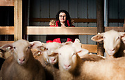 WESTBY, WI — DECEMBER 9: Brenda Jensen, owner of Hidden Springs Creamery, poses for a portrait in the adolescent sheep barn. Jensen and Hidden Springs Creamery have won numerous National and International awards for their aged sheep cheeses.