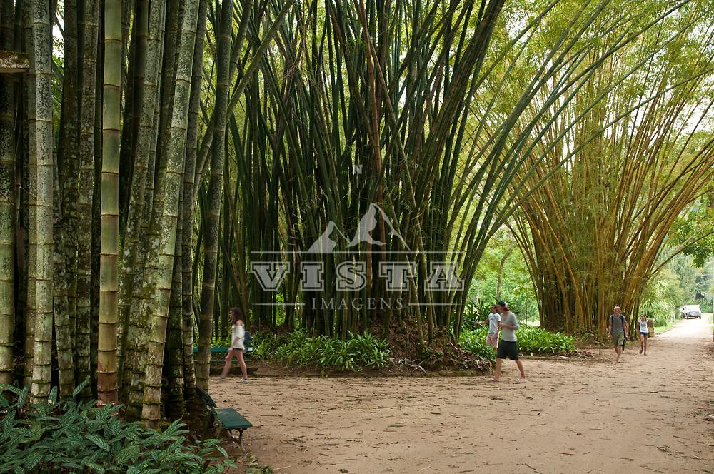 Bambu-gigante, Dendrocalamus giganteus Munro, Jardim Botanico, Rio de Janeiro, Brasil, foto de Ze Paiva, Vista Imagens.