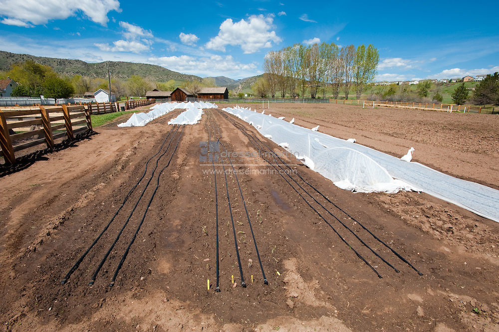 Denver Botanic Gardens, Chatfield, CSA garden, Community Supported Agriculture, food, Meghan Williams, CSA grower, Jenny Thomas, assistant grower