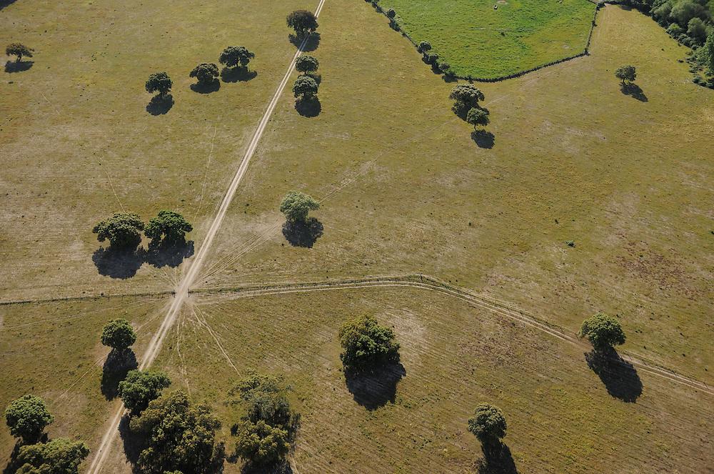 Aerial image.Dehesa forest, Salamanca Region, Castilla y León, Spain