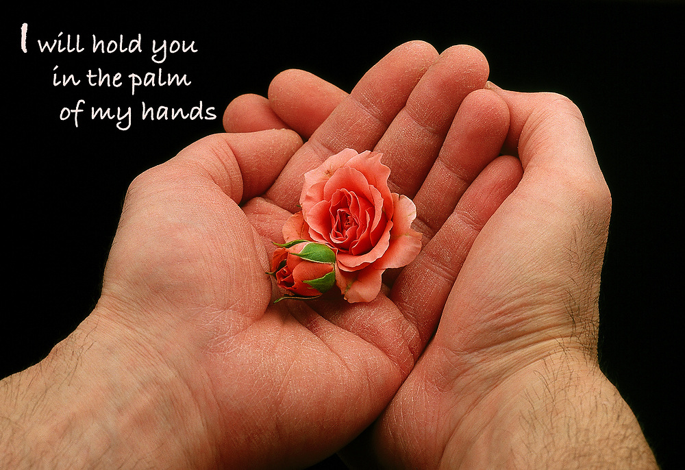 "Sheltered Souls - hands cupping roses, with reassuring quote: ""I will hold you in the palm of my hands."""