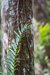 fern plant against a tree trunk in The Everglades