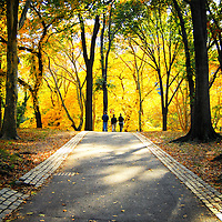 People walking in Central Park in the autumn. Manhattan, New York City.