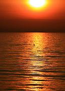 Bottlenose Dolphin dorsal fin breaching surface at sunset, sunrise 2