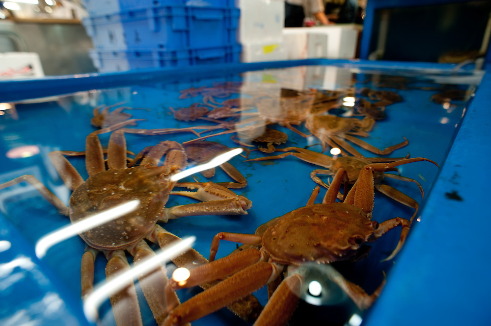 Live crabs for sale