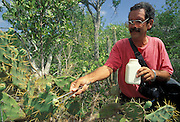 Botanist, Alberto Areces collects new variety of Opuntia cactus from small island, Cayo Venado, in Cuba.