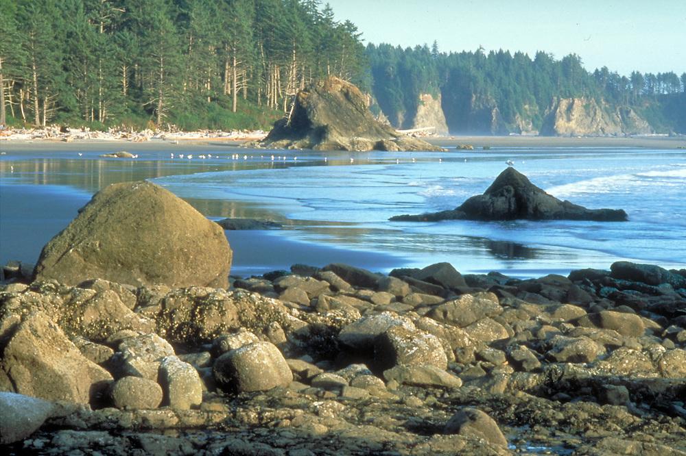 Coastline of Olympic Peninsula in Washington State